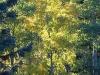01_autumn_trees_sustainable